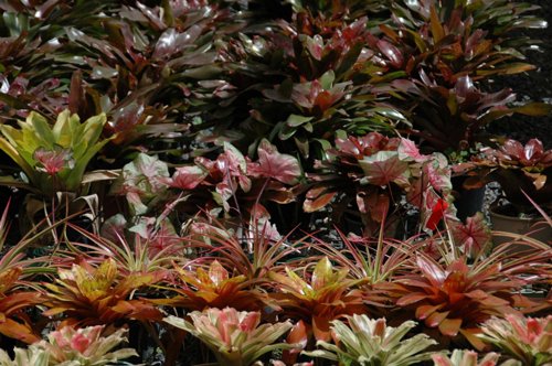 Indoor Plant