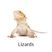 Lizards info