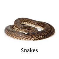 Snakes infoi